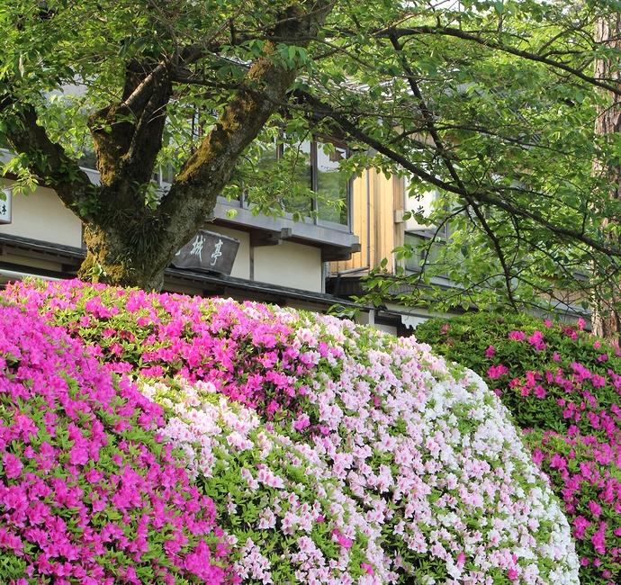 兼六園や金沢城を彩るツツジの花