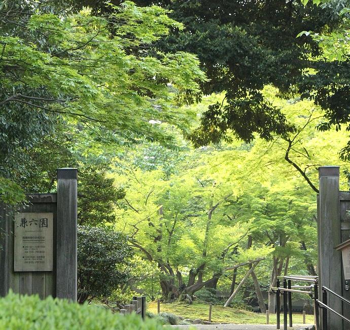 緑が茂る兼六園(桂坂口からのぞいてみる)