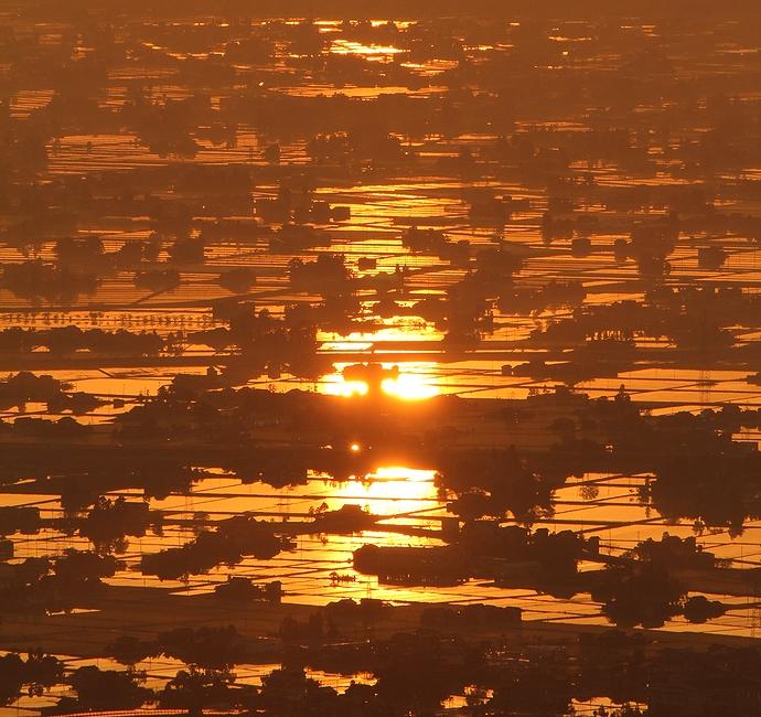 黄金色に輝く初夏の砺波平野