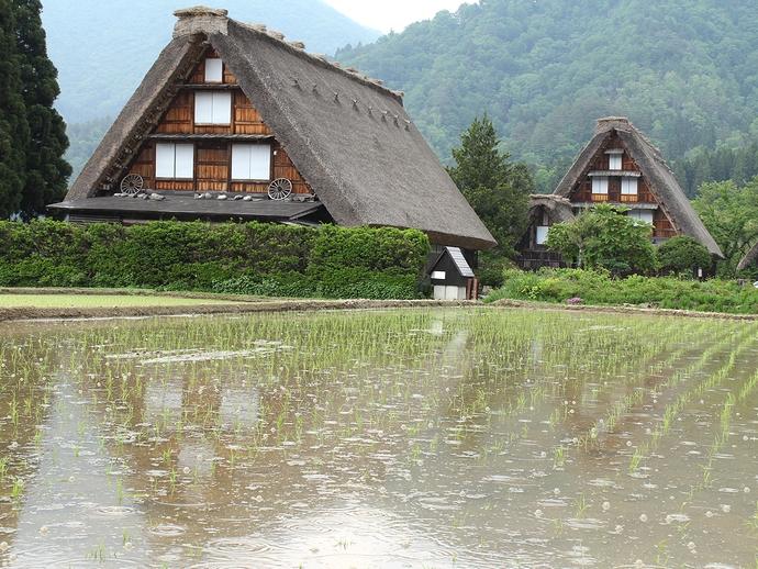 白川郷 田んぼに落ちる雨滴