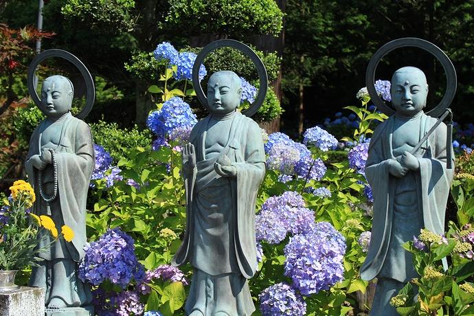 仏像と紫陽花 松本市弘長寺にて