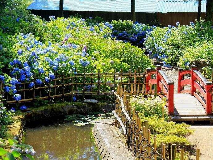 松本のあじさい寺 弘長寺の庭園