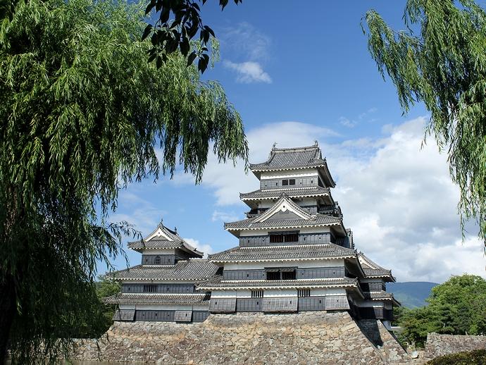 松本城天守 柳の木とともに