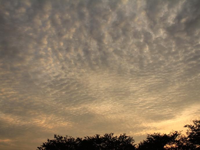 夏の夕暮れ 羊雲漂う (金沢市にて)