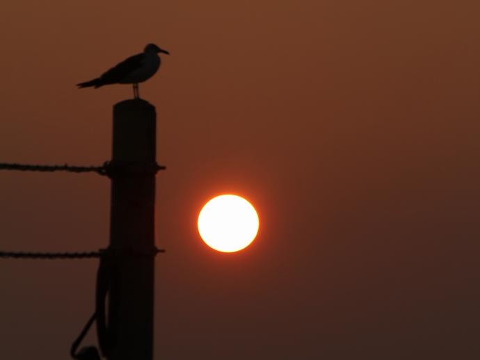 徳光海岸 海鳥のシルエットと夕日