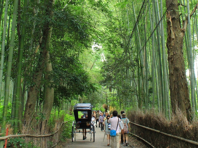 目抜き通りから落ち着いた竹林へ 人力車走る(京都・嵐山)