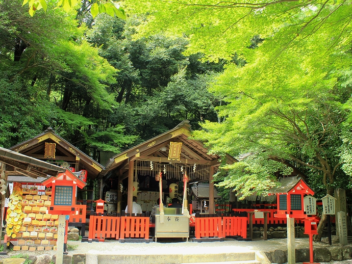 緑が眩しい野宮神社(京都市嵐山にて)