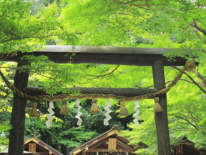 野宮神社の鳥居と鮮やかな青葉
