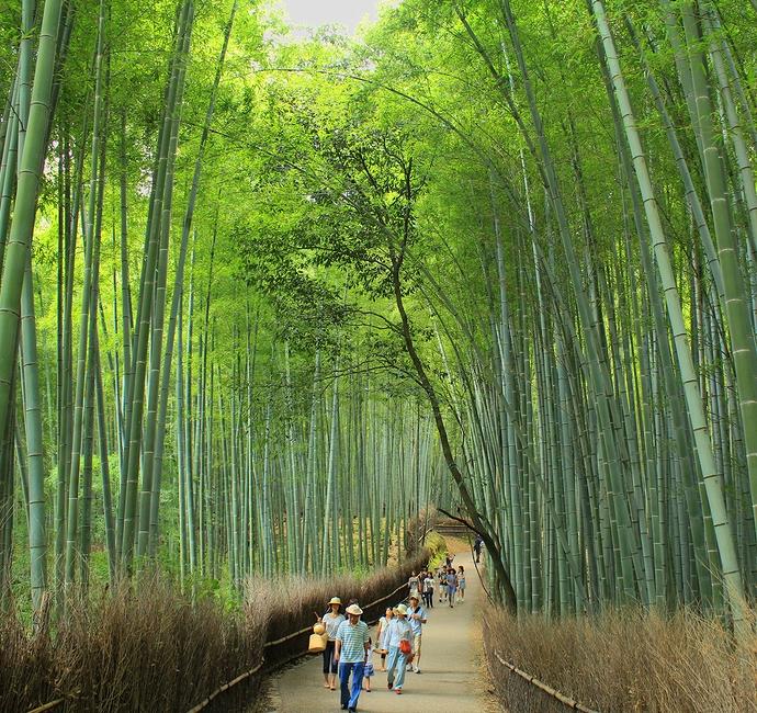 京都嵐山 夏の竹林の小径