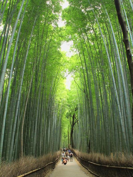 京都嵐山 竹林の小径を歩いて