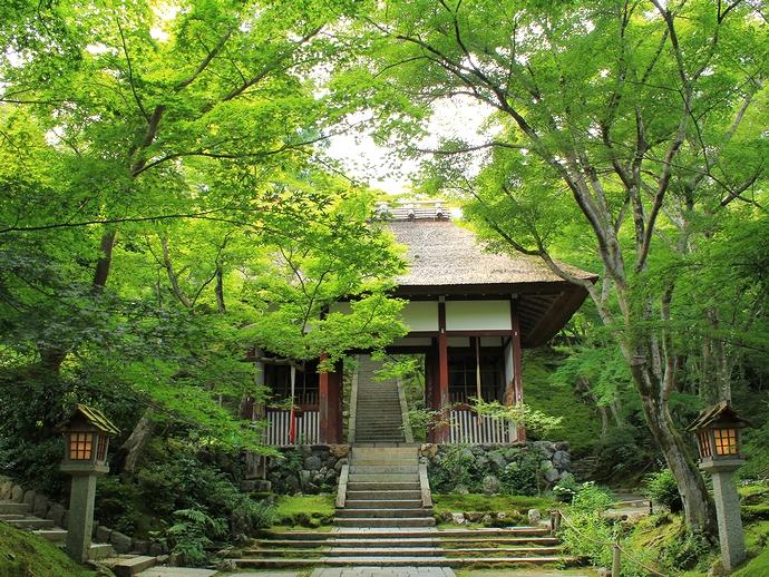 京都の常寂光寺 仁王門と青葉のモミジ