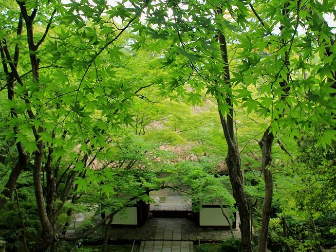 常寂光寺 仁王門と緑のモミジ