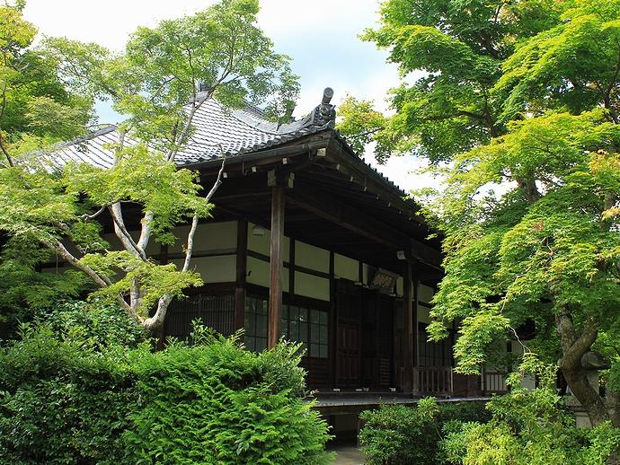 京都・常寂光寺のご本堂 青葉のモミジとともに