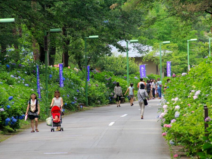 富山・太閤山ランドの「あじさい通り」