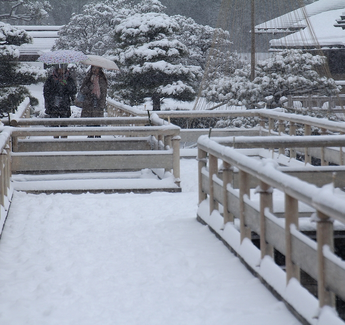 浜離宮恩賜庭園の雪景色 お伝い橋