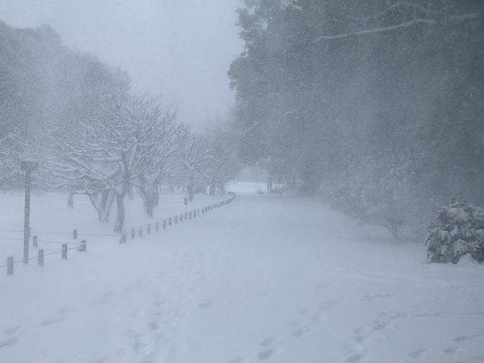 吹雪で視界悪く 2014東京大雪 浜離宮にて