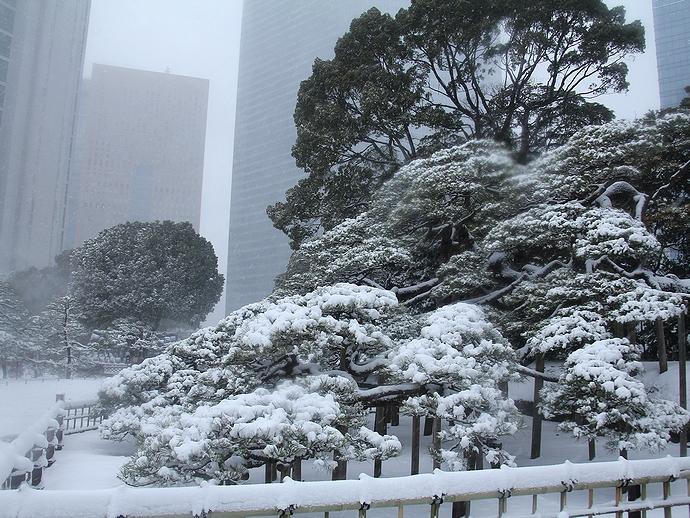 浜離宮 三百年の松が雪化粧.jpg