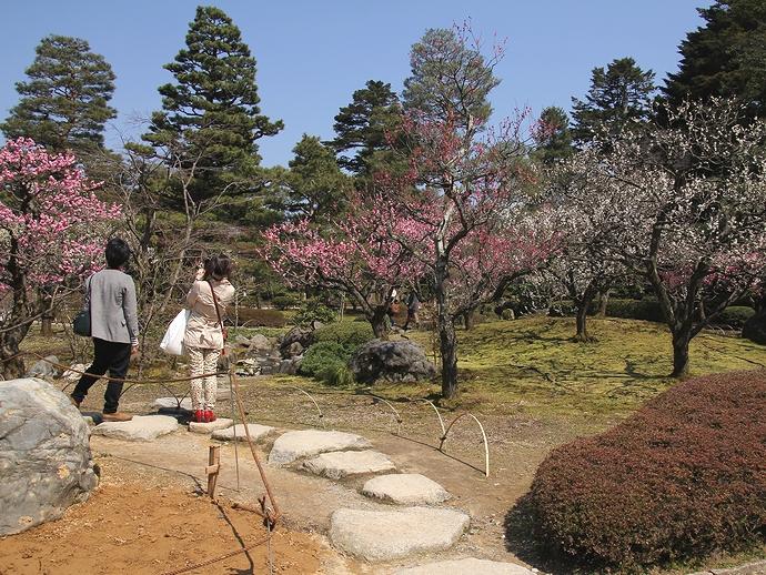梅を撮る女性たち(兼六園梅林にて)