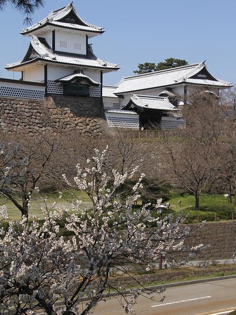 金沢城石川門と満開のカラミザクラ