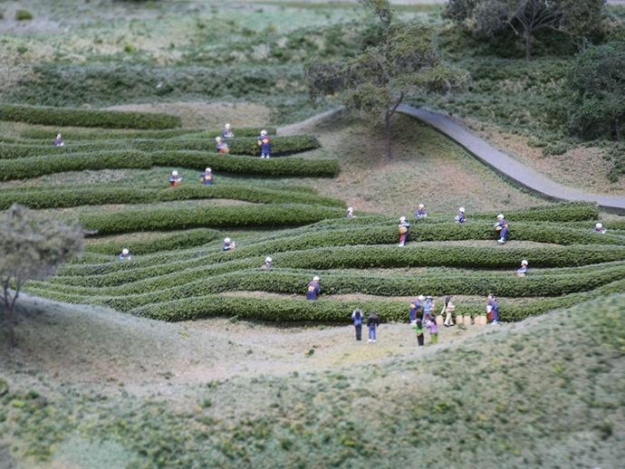 お茶畑で茶摘み中(リニア・鉄道館のジオラマ)