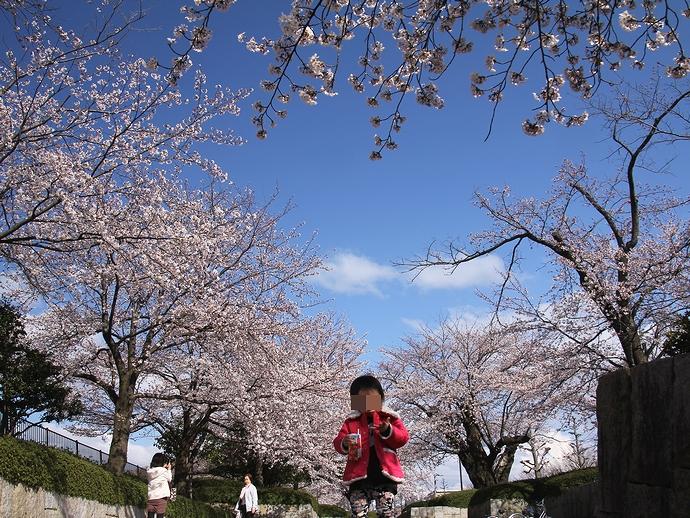 娘、桜の木の下で(金沢市営陸上競技場)