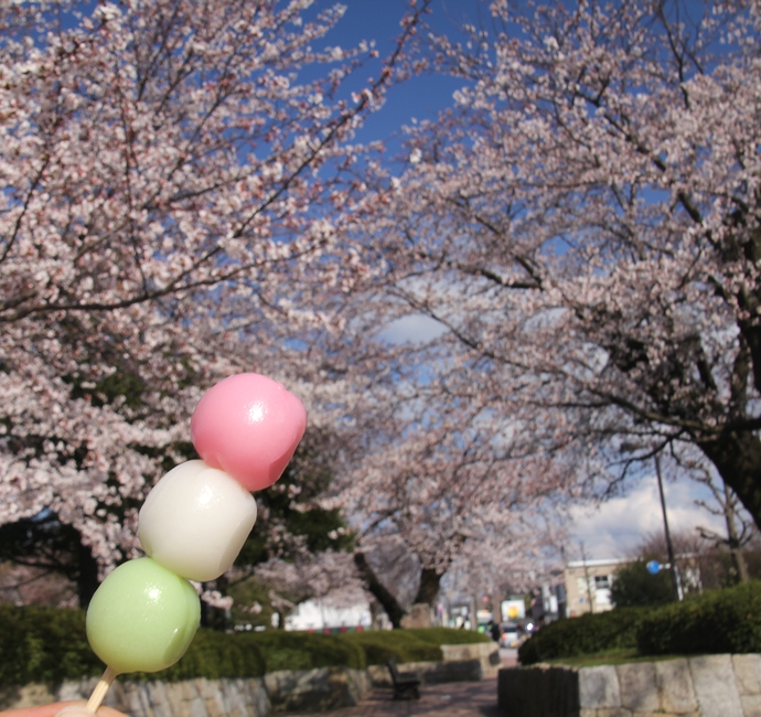 桜と花見団子のコラボレーション(金沢市営陸上競技場)