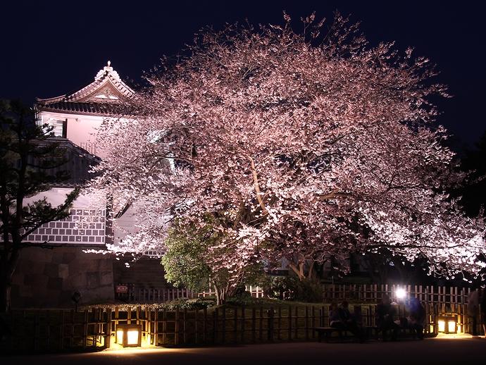 三ノ丸広場から見た石川門と桜のライトアップ