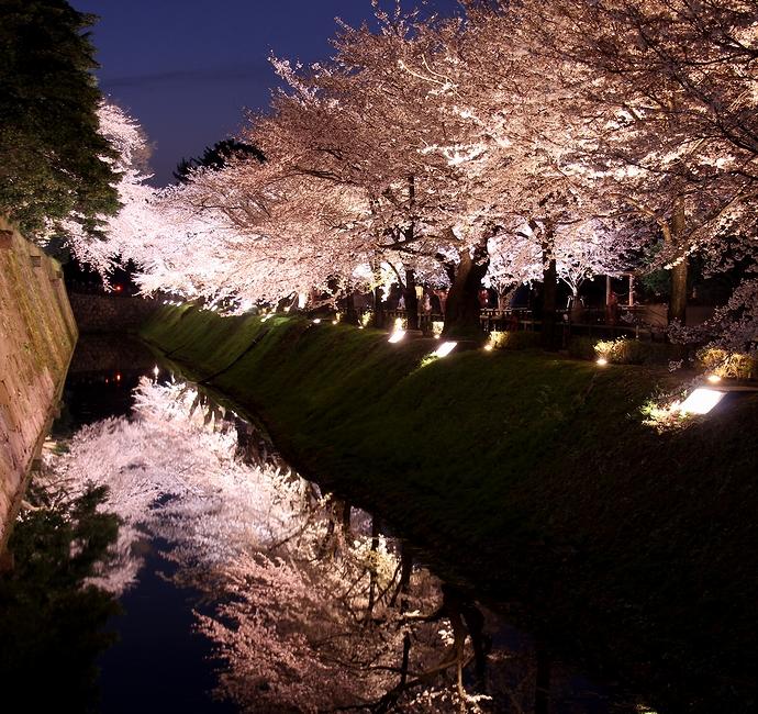 金沢城で最も美しい桜スポット