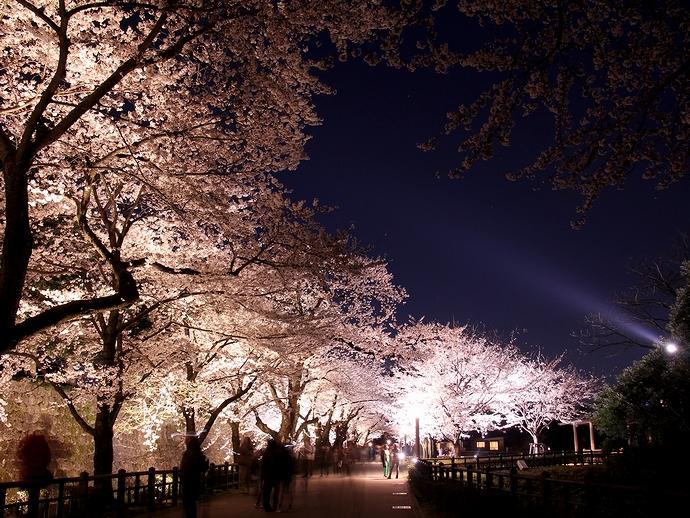 金沢城の桜並木ライトアップ
