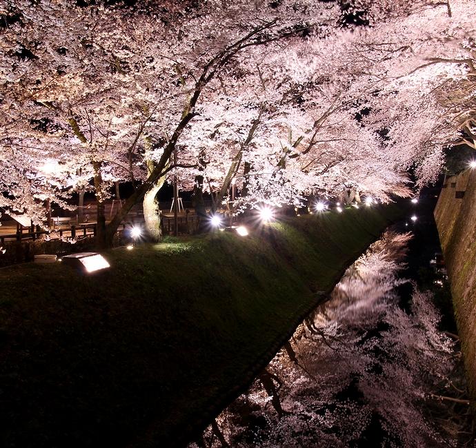 お堀の水鏡に映る桜 金沢城の観桜期ライトアップにて