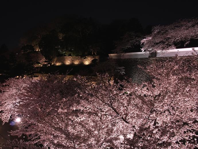 金沢城石川門と夜桜 観桜期ライトアップ