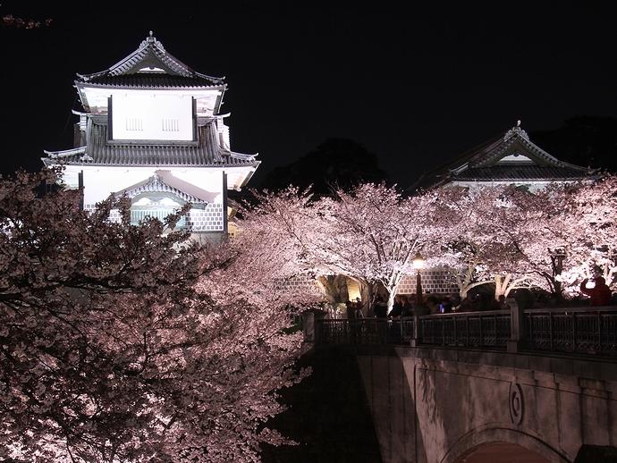 ライトアップされた金沢城石川門と満開の桜
