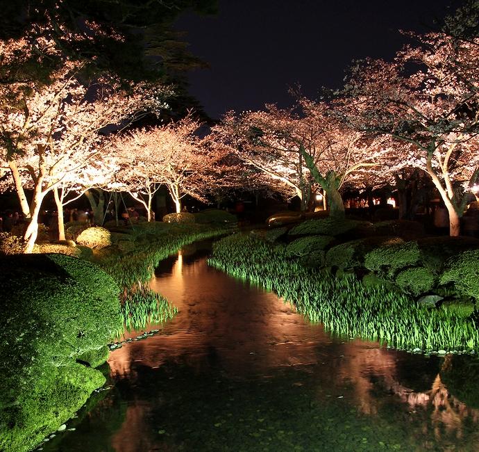 兼六園の曲水と桜のライトアップ