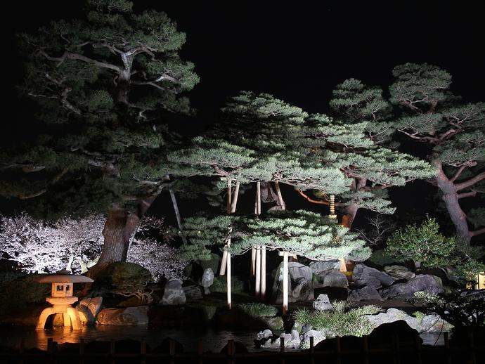 七福神山のライトアップ(兼六園・観桜期)