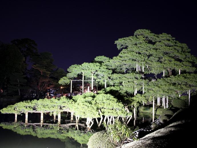 松のライトアップ(兼六園観桜期ライトアップにて)