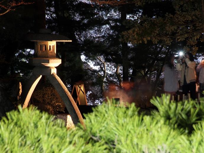 松の木越しにことじ灯籠(兼六園観桜期ライトアップ)