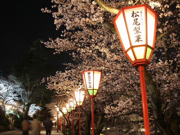 兼六園の夜桜を照らすぼんぼり
