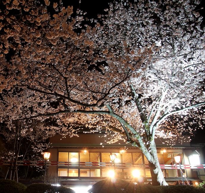 茶店の灯り 兼六園観桜期ライトアップにて