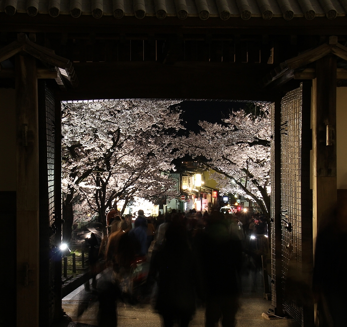 石川門表門越しに桜のライトアップ