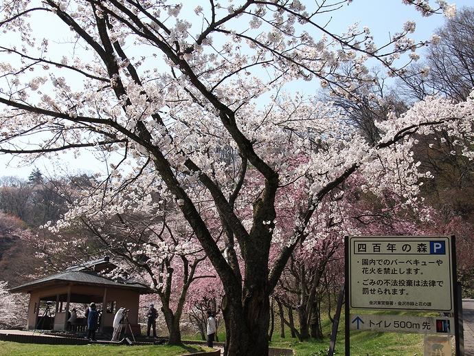 金沢市卯辰山 四百年の森