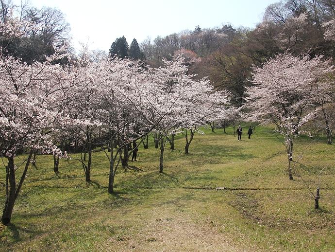 春の四百年の森