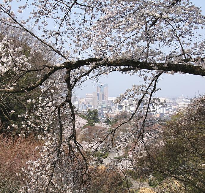 卯辰山から眺めた金沢市街と桜