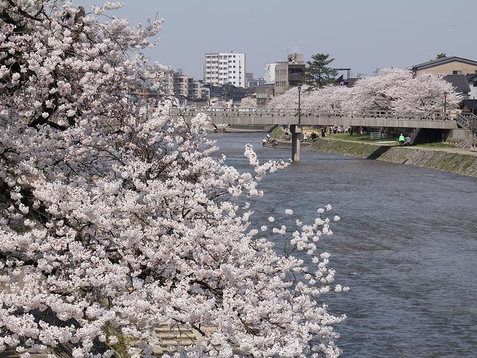 桜と梅の橋(金沢市浅野川)