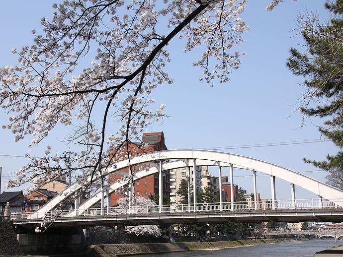 桜と天神橋(金沢市浅野川)