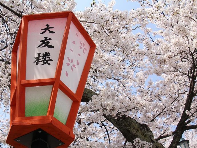 桜並木とぼんぼりと(金沢市浅野川)