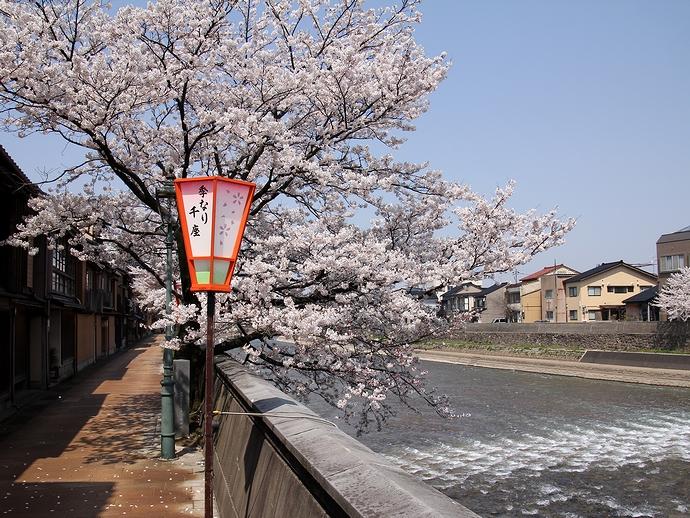 春の浅野川と主計町茶屋街(金沢市)