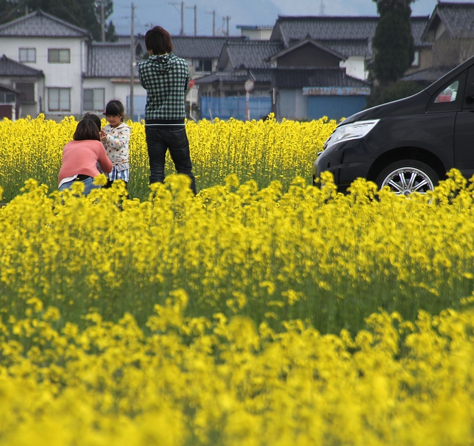 菜の花畑で小休憩(富山県入善町)
