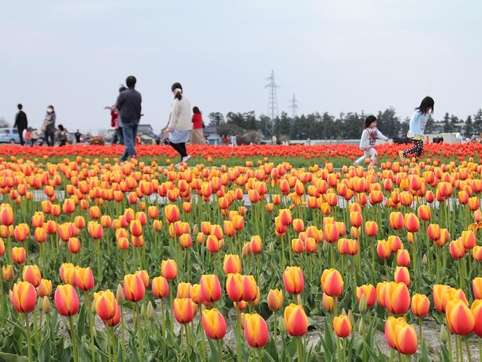 フラワーロードで楽しむ人たち(富山県入善町)