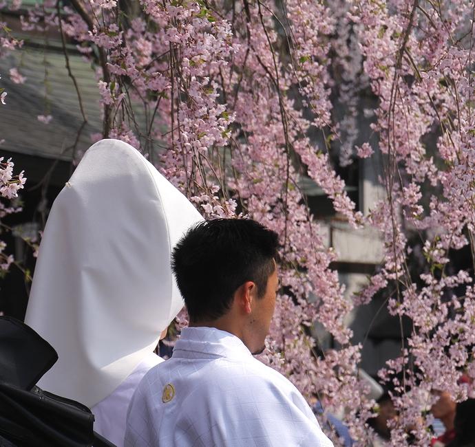 角館の桜と結婚式の光景