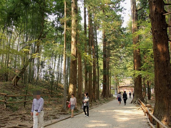 中尊寺境内の杉並木